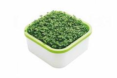 «Здоровья КЛАД» (универсальный) для микрозелени