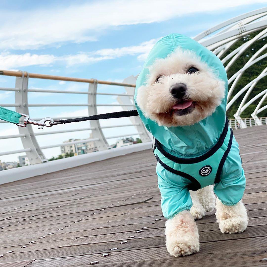 дождевик для собаки puppyangel