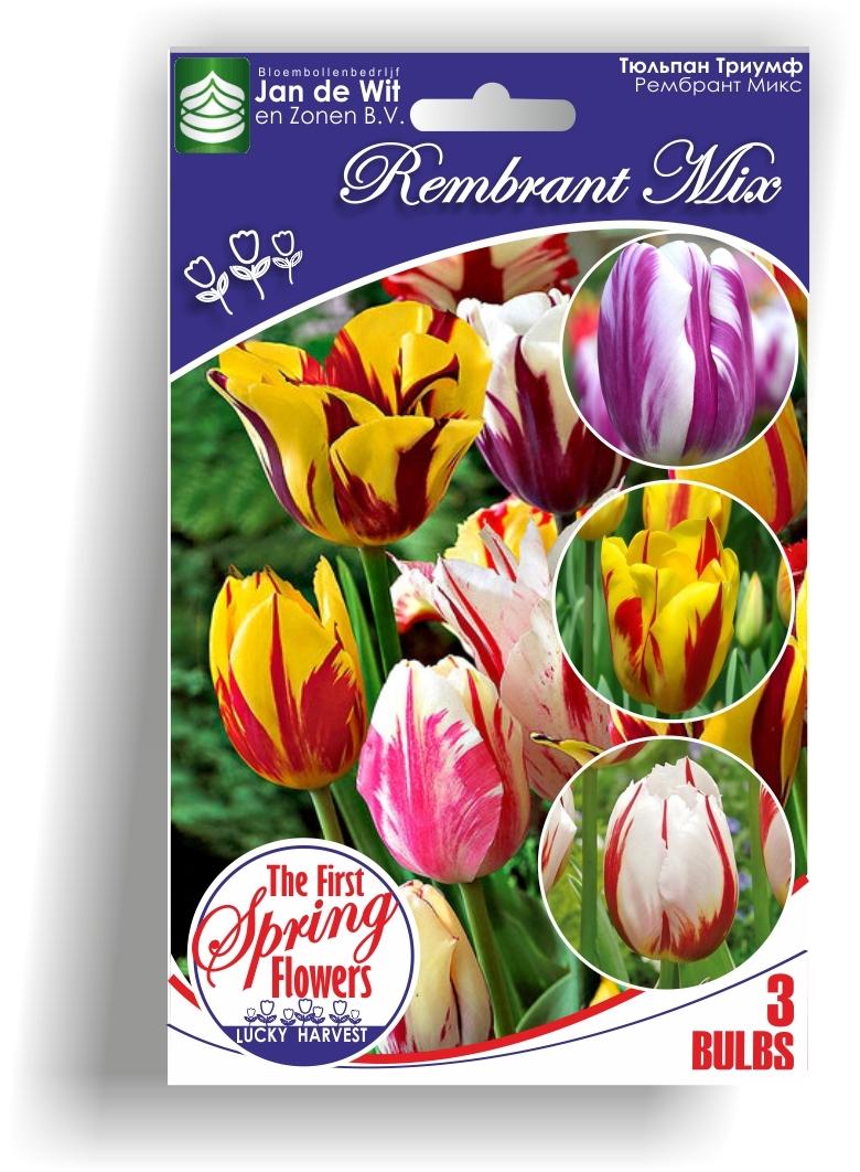 Луковицы Тюльпана Триумф Смесь Rembrandt Mix (Рембрант Микс) TM Jan de Wit en Zonen B.V. ( количество в упаковке 3 луковицы)