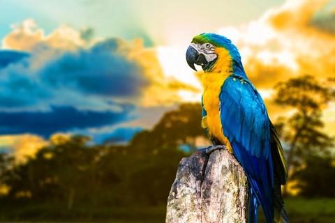 Картина раскраска по номерам 30x40 Разноцветный попугай на пеньке