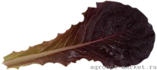 Enza Zaden Диаблотин семена салата батавия (Enza Zaden / Энза Заден) диаблотин.jpg