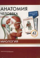 Анатомия человека. Миология КАРТОЧКИ (43шт)