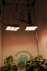 LED светильник Quantum Board 80w Just Grow