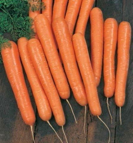 Нантская Волкано F1 семена моркови нантской (Vilmorin / Вильморин) Волкано_F1_семена_овощей_оптом.jpg