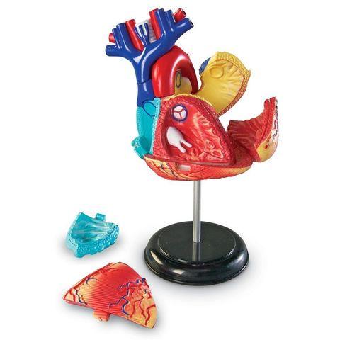 LER3334 Конструктор Анатомия человека Сердце Learning Resources