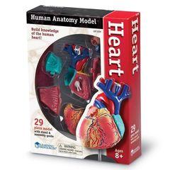 Анатомия человека. Сердце, Learning Resources упаковка