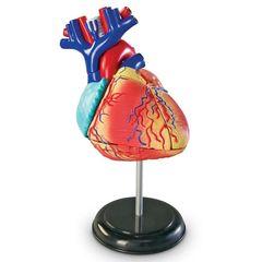 Конструктор Анатомия человека. Сердце, Learning Resources