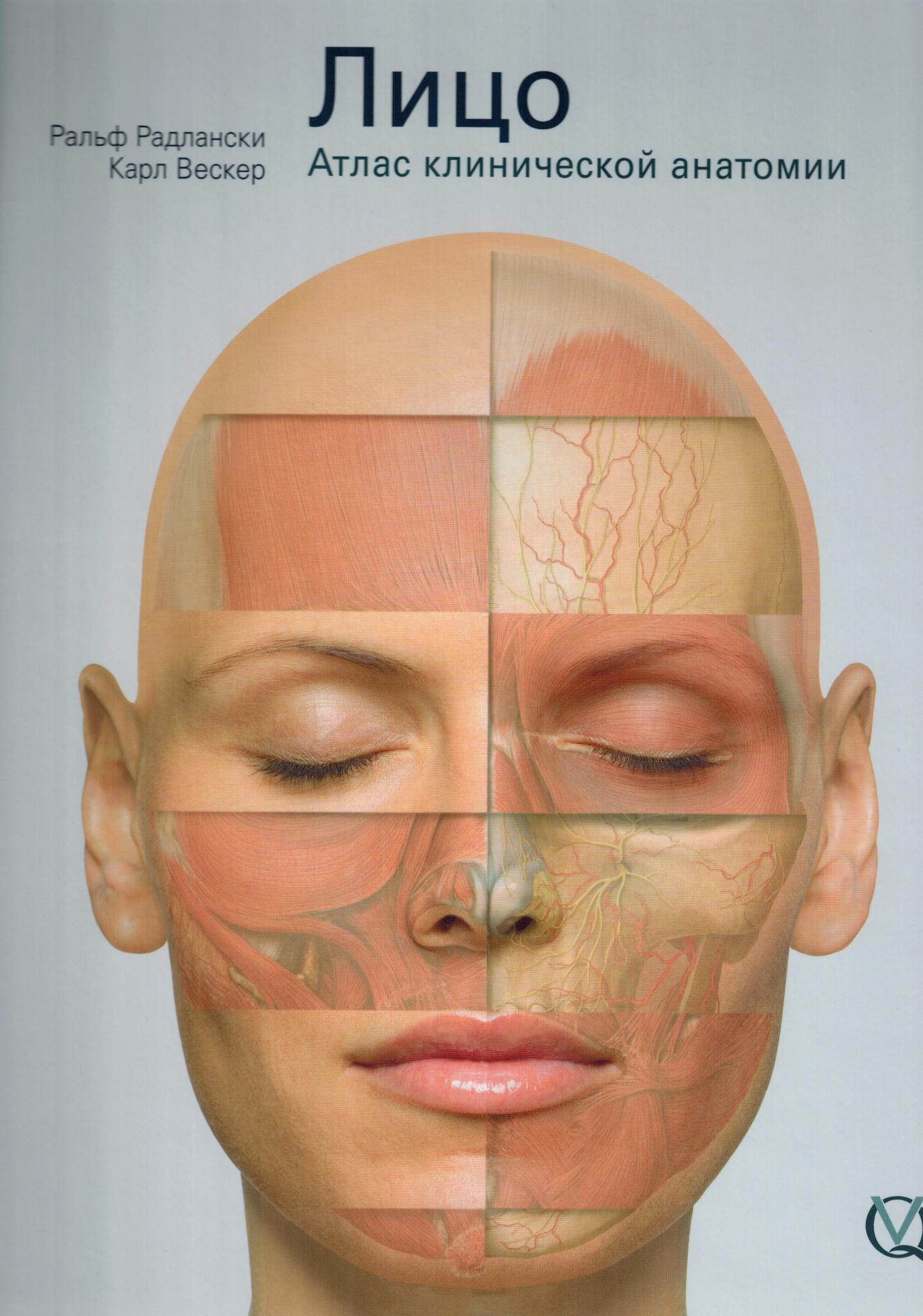 Анатомия Лицо. Атлас клинической анатомии liso.jpg