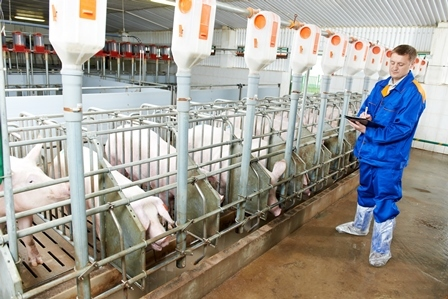 Пример расчетной СЗЗ для крупного селекционного свинокомплекса