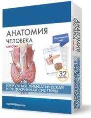 Анатомия человека. Иммунная, лимфатическая и эндокринная системы. Карточки (32 шт.)