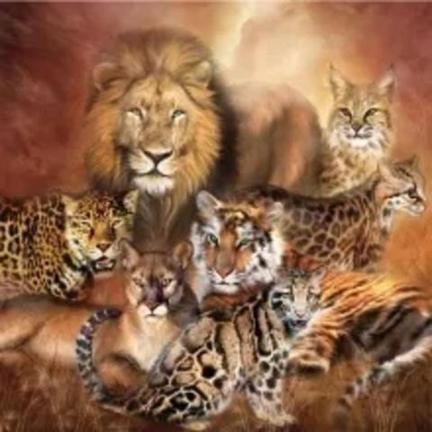Алмазная Мозаика 20x30 Семейство кошачьих (арт. MTCH8225)
