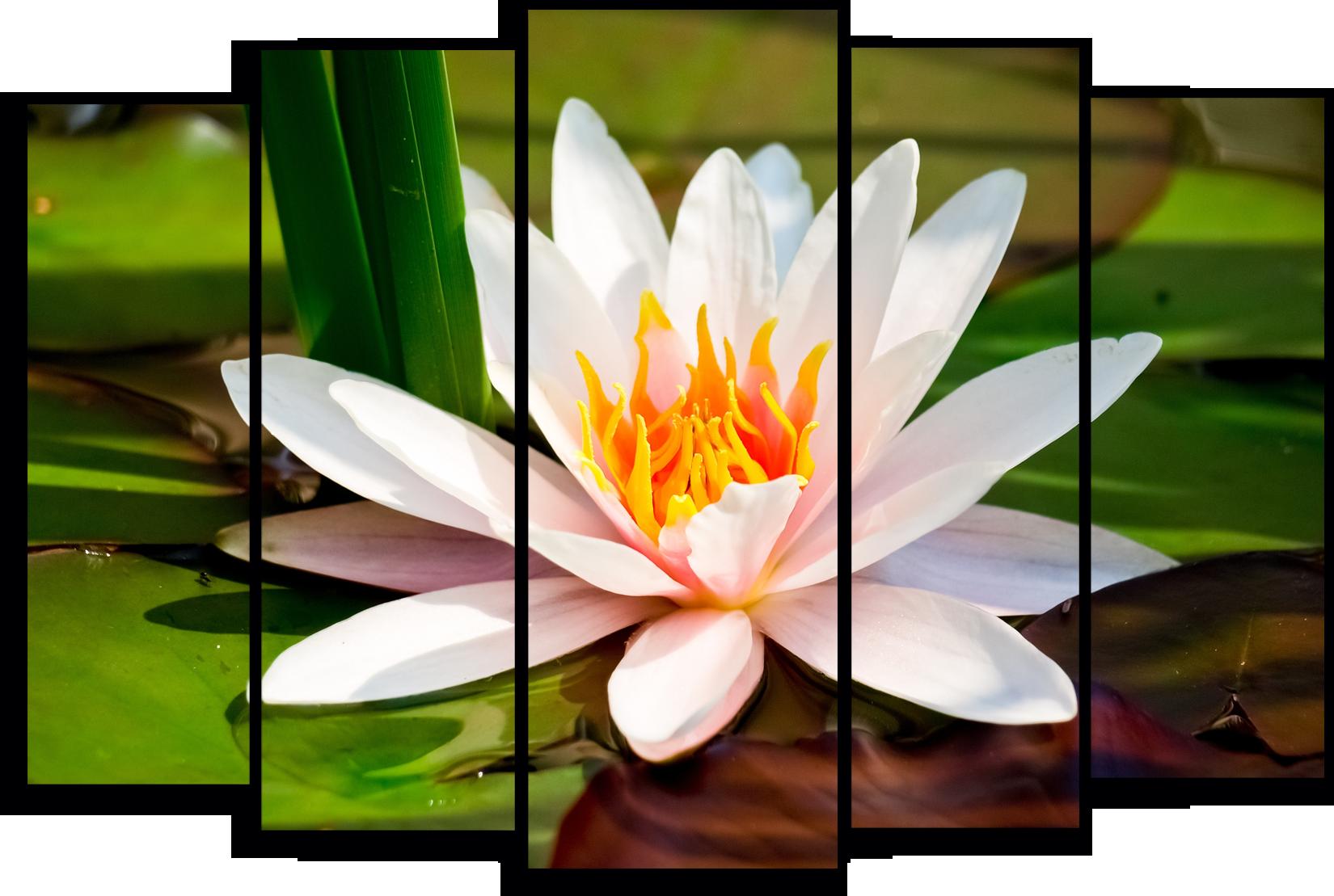 """Цветы Модульная картина """"Лилия в воде """" М792.png"""