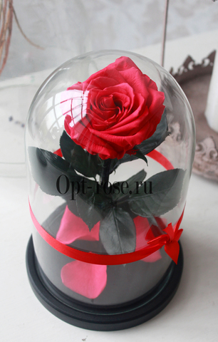 Роза в колбе Premium Оптом(Выс*Диам*Бутон 27*15*7-8см)Цвет фуксия