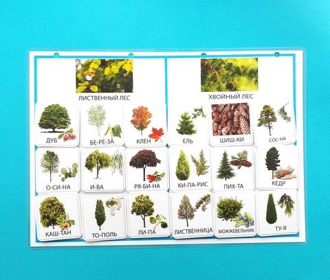 Хвойные и лиственные деревья. Окружающий мир (адаптивный материал). Развивающее пособие на липучках Frenchoponcho (Френчопончо)