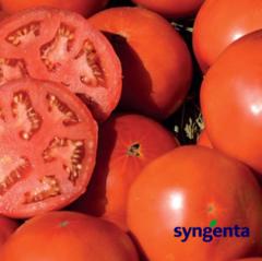 Сагатан F1 семена томата детерминантного (Syngenta / Сингента)