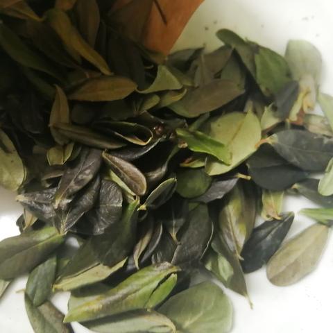 Листья брусники суздальские