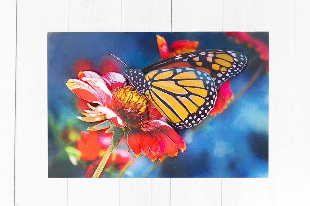 Бабочка на гербере - готовая работа, фронтальный вид.