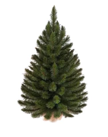 Triumph tree ель Лесная красавица в мешочке 45см зеленая
