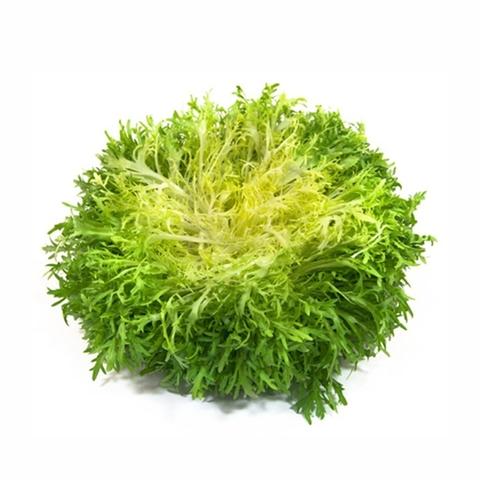 Салат GREEN ECO Фризе зеленый 1 шт