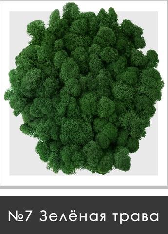 Стабилизированный мох (ягель) цвет №7 Зеленая трава