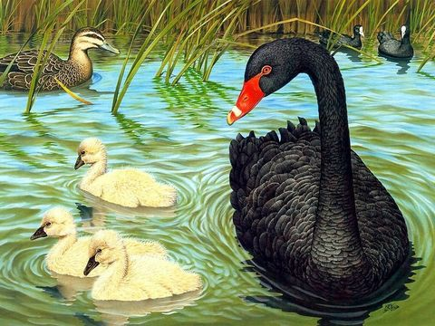 Картина раскраска по номерам 30x40 Птицы в пруду