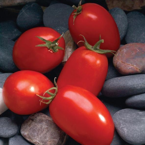 Томат Мариана F1 семена томата детерминантного (Sakata / Саката) Мариана_семена_овощей_оптом.jpg