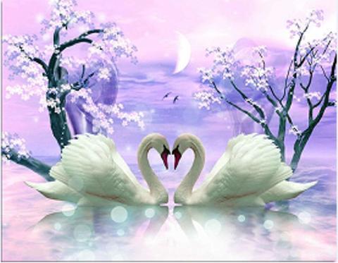 Картина раскраска по номерам 30x40 Любовь пары лебедей