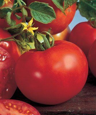Томат Марисса F1 семена томата индетерминантного (Seminis / Семинис) МАРИССА_F1__Marissa__семена_овощей_оптом.jpg