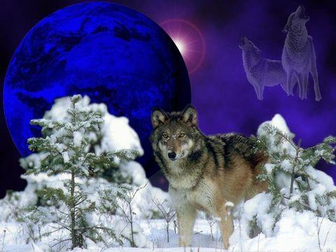 Картина раскраска по номерам 30x40 Волк зимой