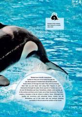 The Killer Whale (Discover Our Amazing World) Reader. Комплект (книга + мультиром)
