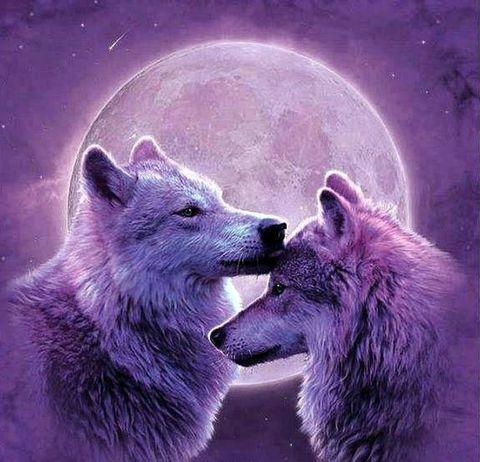 Картина раскраска по номерам 30x40 Два волка на фоне луны