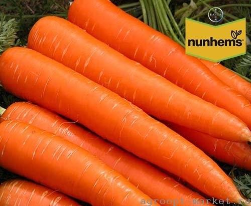 Nunhems Каданс F1 семена моркови нантской (Nunhems / Нюнемс) каданс.jpg