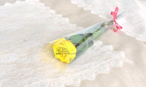 Роза на стебле King Оптом Высота*Бутон (50см*7-8см) Цвет желтая