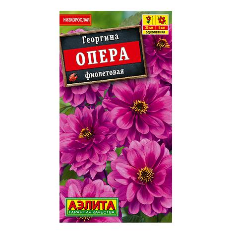 Георгина Опера фиолетовая (Аэлита)