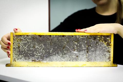 Натуральный алтайский мед в сотах HoneyForYou, 1000 грамм