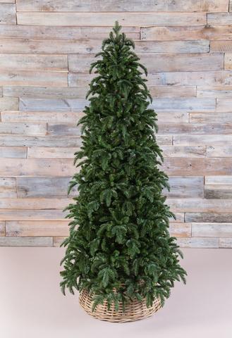 Triumph Tree ель Нормандия стройная 230 см
