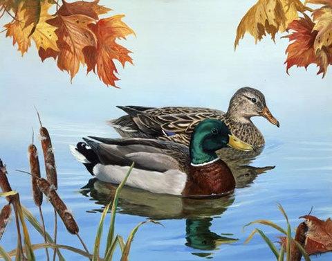 Картина раскраска по номерам 30x40 Утка и селезень в пруду