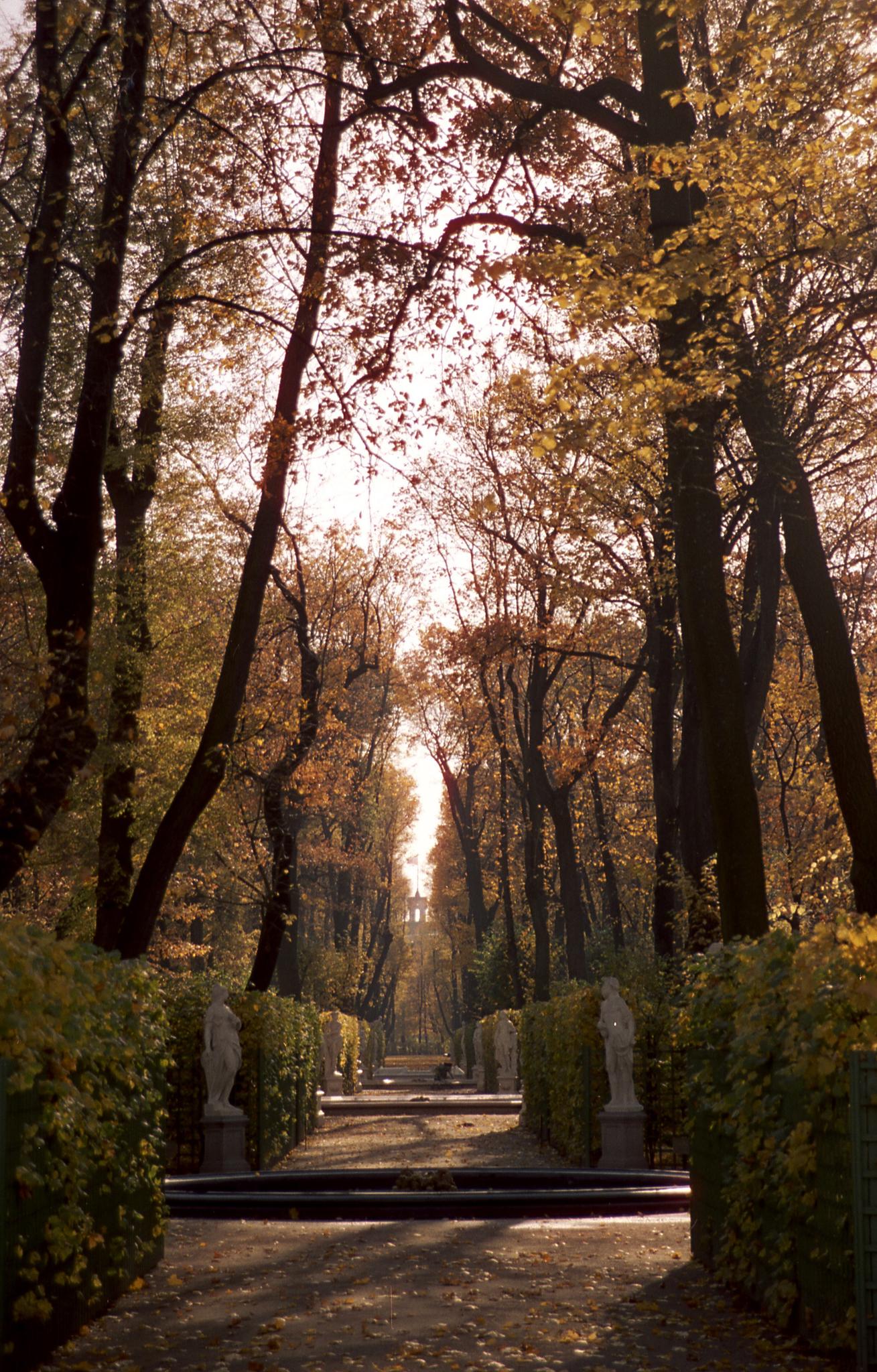 CINESTILLFILM CineStill Xpro C-41 Daylight 50. Автор - Сарма Ольга
