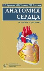Анатомия сердца (в схемах и рисунках)