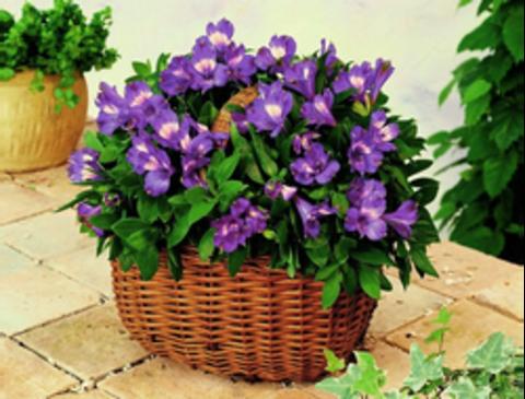 Алмазная Мозаика 40x50 Фиолетовые цветы в корзине