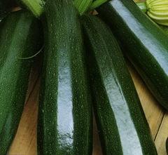 Тосха F1 семена кабачка (Clause / Клос)