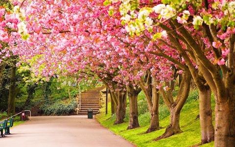 Алмазная Мозаика + Багет 40x50 Прогулка под розовыми деревьями