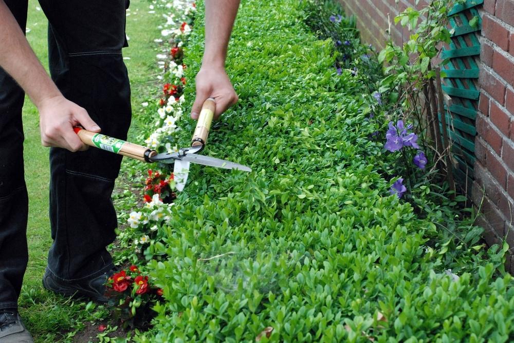 Ножницы садовые для живой изгороди Okatsune 231