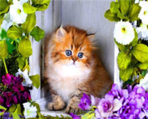 Алмазная Мозаика 40x50 Рыжий котенок в рамке из цветов