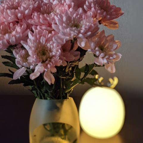 Ваза для квітів без приводу