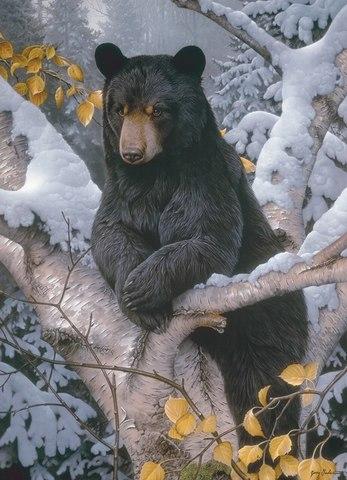 Картина раскраска по номерам 30x40 Медведь на ветке зимой
