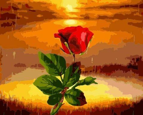 Картина раскраска по номерам 30x40 Красная роза на закате