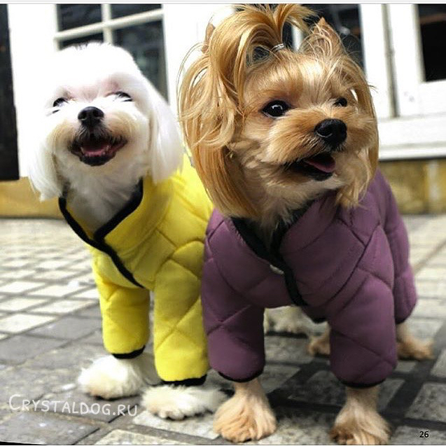 стеганные комбинезоны для собак