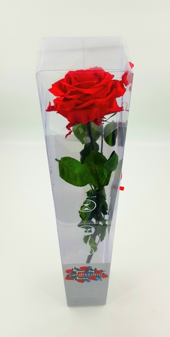 Стабилизированные цветы. Роза на стебле.Красная. Verdissimo.