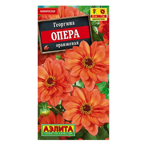 Георгина Опера оранжевая (Аэлита)